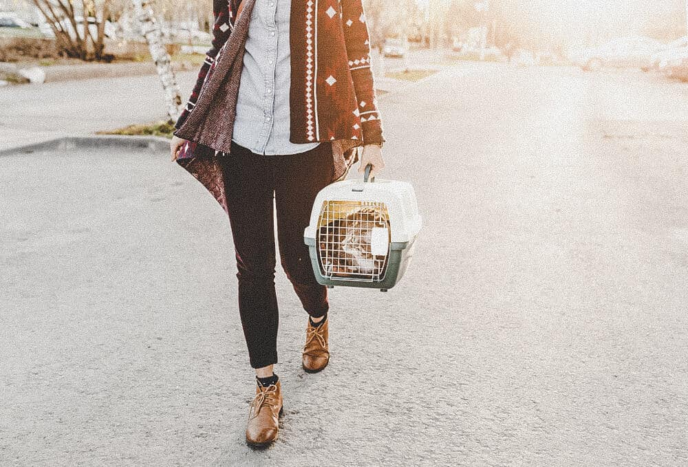 Reisen mit Tieren: Auswanderung mit Haustieren